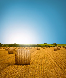 Country Side Hay Bale Scenery